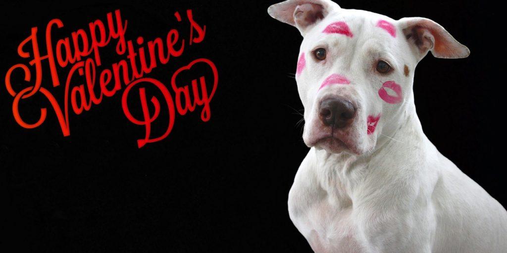 犬バレンタイン